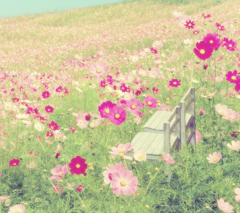 どこまでも続く一面のコスモス畑の中の白い椅子