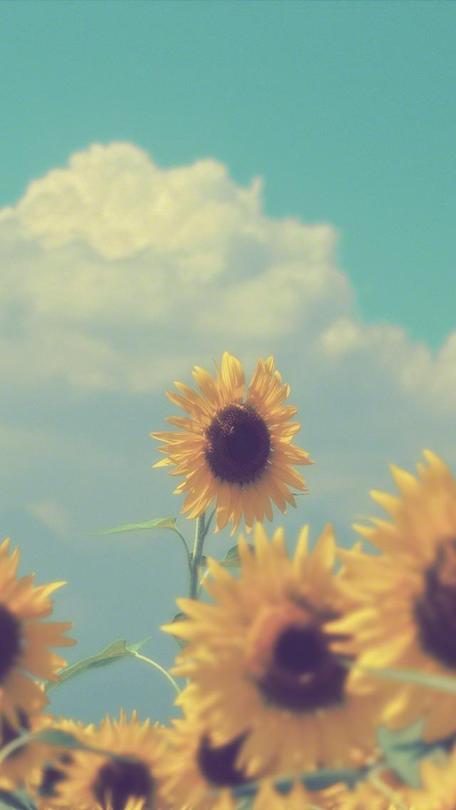 入道雲と顔を出したヒマワリの花